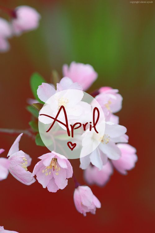 Good Morning Friends Wallpaper With Quotes April Flowers Pictures Photos And Images For Facebook