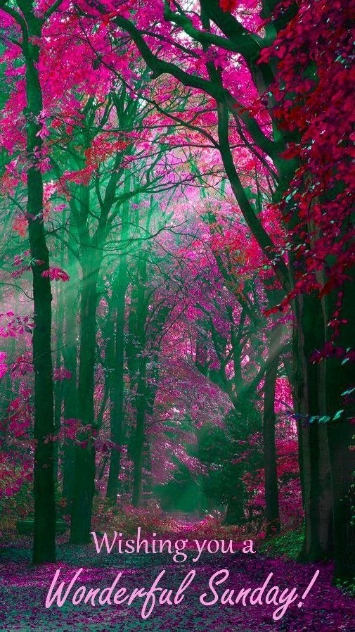 Fall Fairys Wallpapers Wishing You A Wonderful Sunday Pictures Photos And