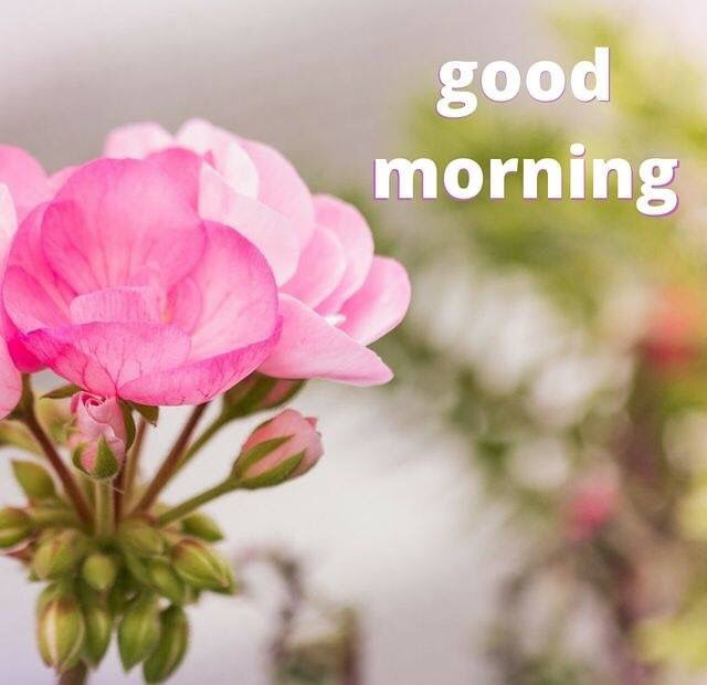 Pinterest Desktop Wallpaper Lotus Quote Pretty Pink Good Morning Flower Pictures Photos And