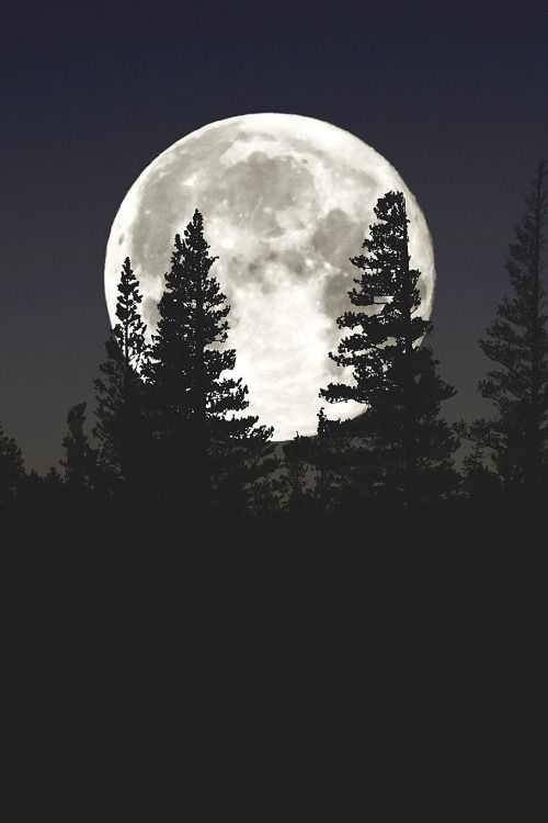 Dark Theme Wallpaper Hd Quote A Full Moon Pictures Photos And Images For Facebook