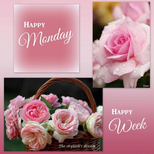 Medium Of Happy Monday Pics