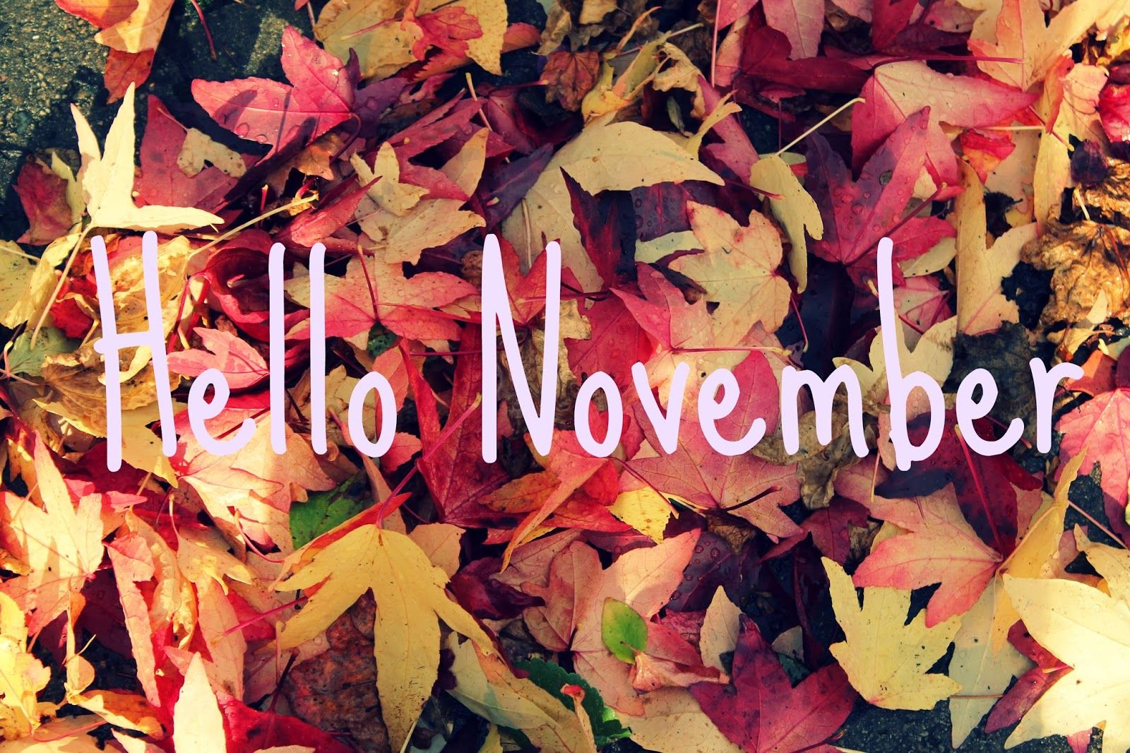 Cute Girly Life Wallpaper Hello November Pictures Photos And Images For Facebook