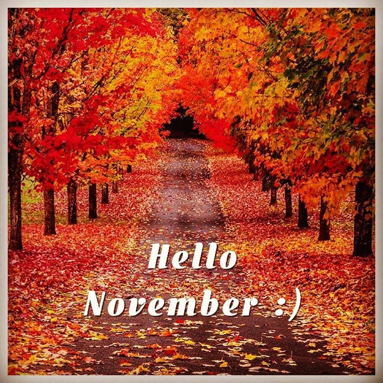 Happy Fall Desktop Wallpaper Hello November Pictures Photos And Images For Facebook