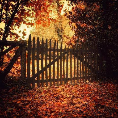 Fall Flowers And Pumpkins Wallpaper Autumn Leaves Pictures Photos And Images For Facebook
