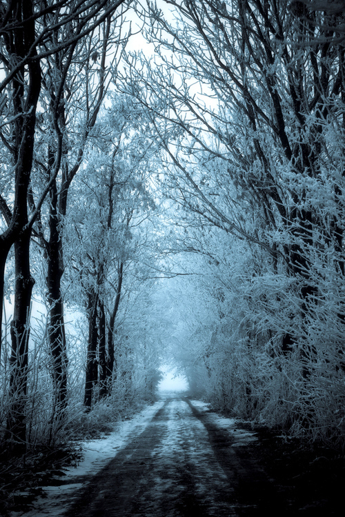 Black And White Self Love Quotes Wallpaper Dark Snowy Trees Pictures Photos And Images For Facebook