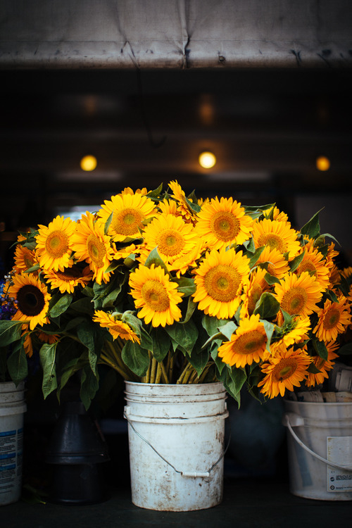 Positive Vibes Quotes Wallpaper Sunflower Bucket Pictures Photos And Images For Facebook