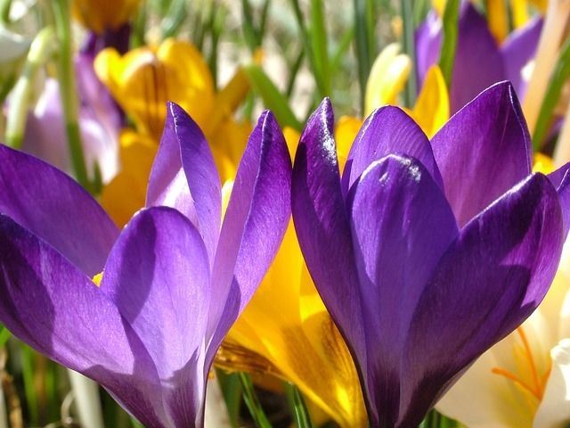I Love Allah Wallpaper Cute Crocus Flowers Pictures Photos And Images For Facebook