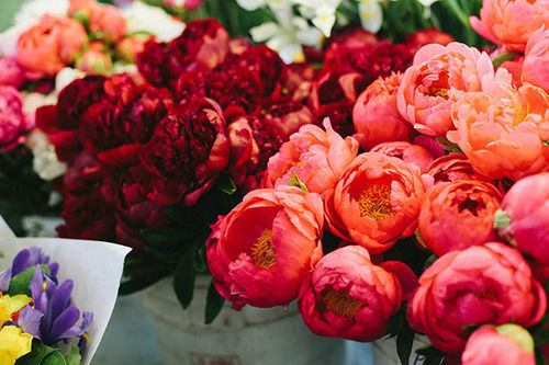 Peony Love Quote Wallpaper Red And Pink Peonies Pictures Photos And Images For