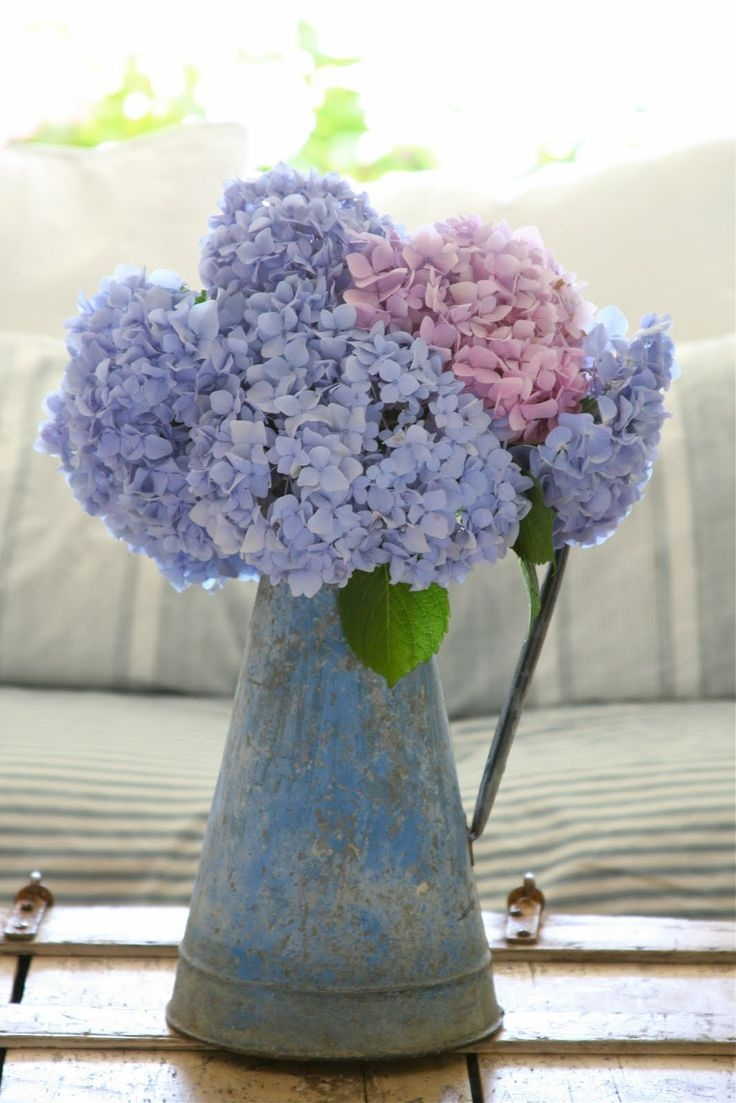 Cute St Patricks Day Wallpaper Pink Amp Lavender Hydrangeas Pictures Photos And Images