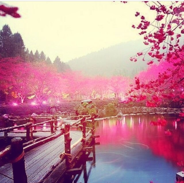 Good Morning Love Wallpaper Quotes Pink Wonderland Pictures Photos And Images For Facebook