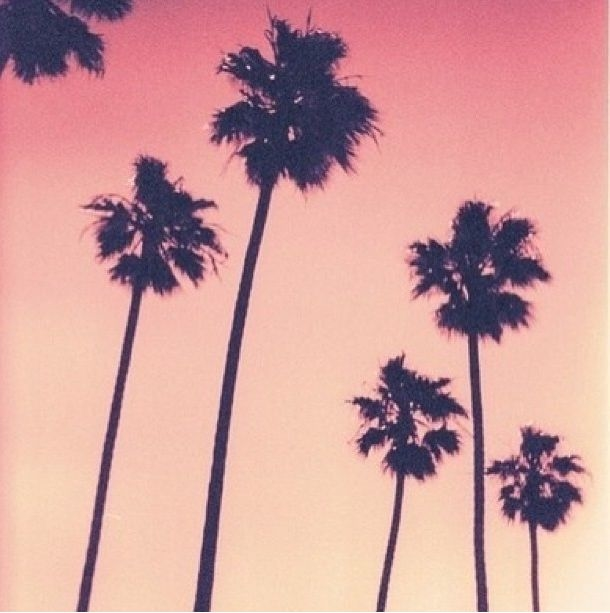 Positive Vibes Quotes Wallpaper Sunset Palm Trees Pictures Photos And Images For