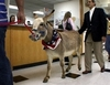 Donkey_witness