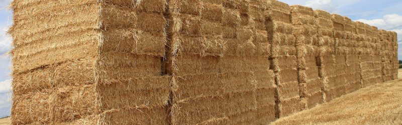 Large Of Straw Bales For Sale