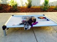 Kuranda Dog Bed. Chew Proof Kuranda Dog Bed. Milo Relaxing ...