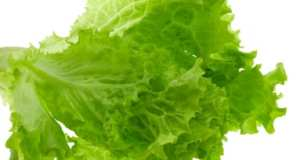 lettuce leaves, isolated