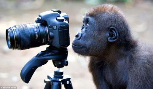 fotografo dilettante