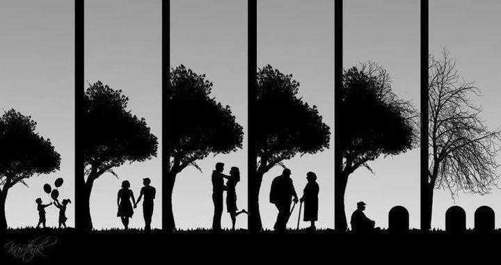 vita ciclo