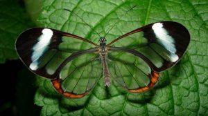 rebound farfalla 3