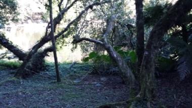 Scoprendo la natura brasiliana nel parco di Nova Petropolis