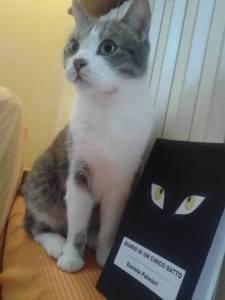 I gatti sanno leggere e scrivere.