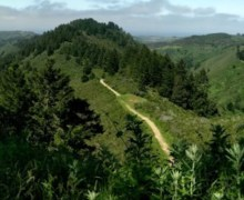Purisima-Creek-Redwoods-North-Ridge-Trail