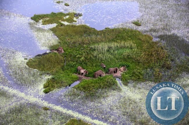 Bwangweulu Swamps Fishing Camps.
