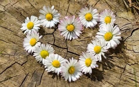 daisy-heart-flowers-flower-heart-medium
