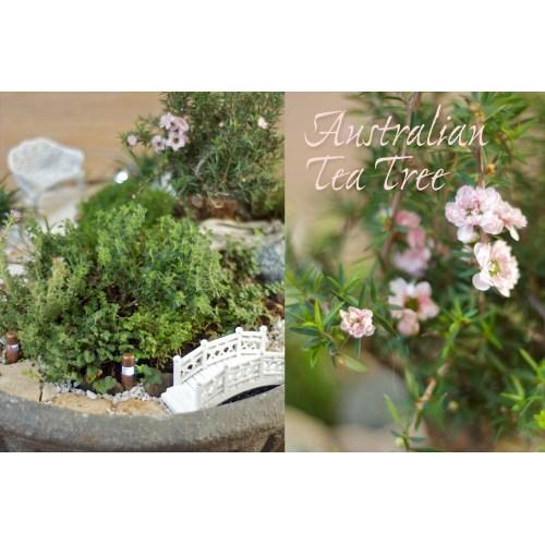 Medium Crop Of Fairy Garden Trees