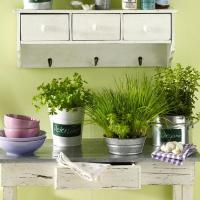 How to Decorate Kitchen with Green Indoor Plants and Save ...