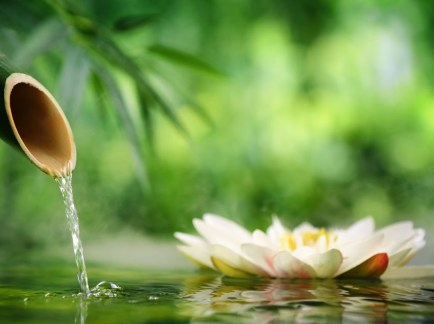 Indulge in a Traditional Thai Massage
