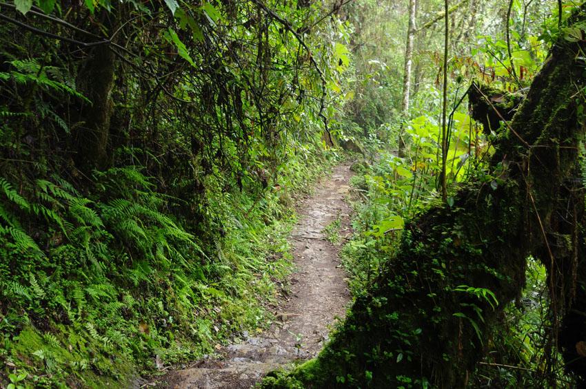 Inca Trail Peru Visit Machu Picchu