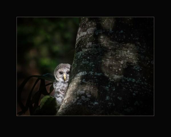 Peek-A-Hoo by Susan Piper