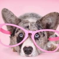 Garnitury i różowe okulary. Jak naprawdę wygląda życie w Australii?
