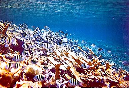 Exumas reef fish