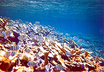 The reef fish in the Exumas were beautiful and plentiful.