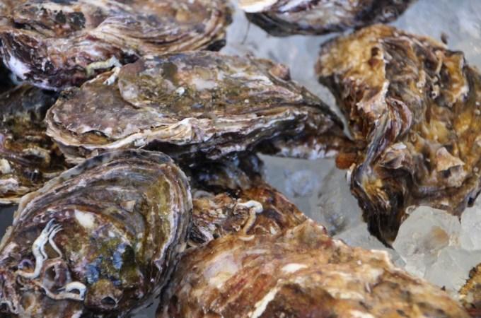 【3月5日開催!!】さんさん商店街オープン記念 志津川湾牡蠣・わかめまつり福興市