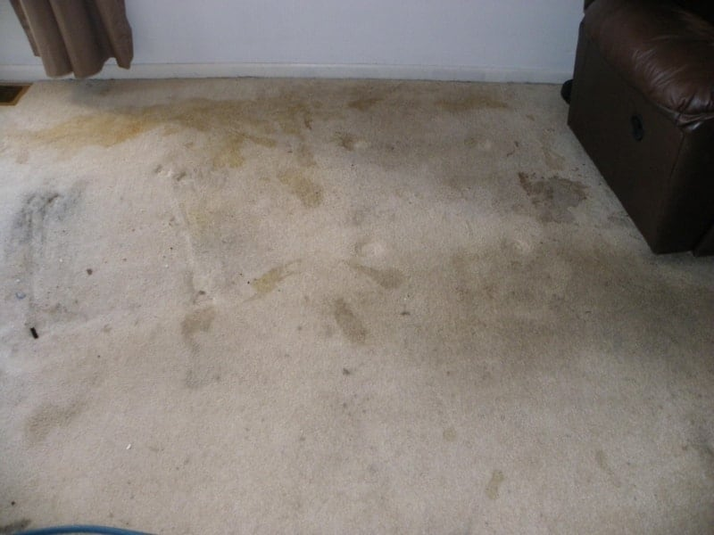 Carpet Cleaning M M Cleaning Services