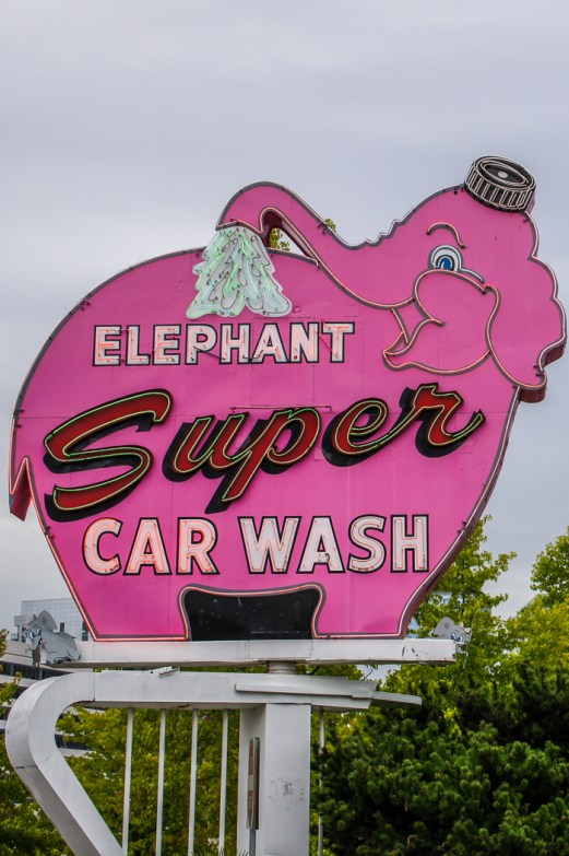 Seattle signe elephant rose