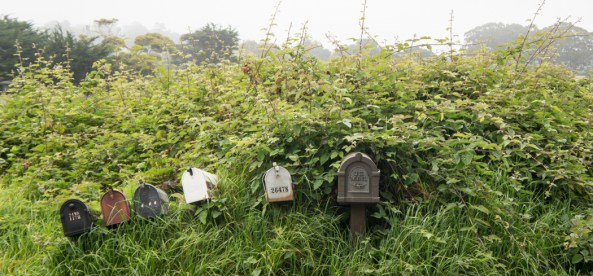 Boites aux lettres perdues dans la végétation - Carmel Californie