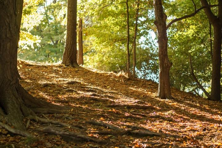 Mount Auburn parc lumière du soleil