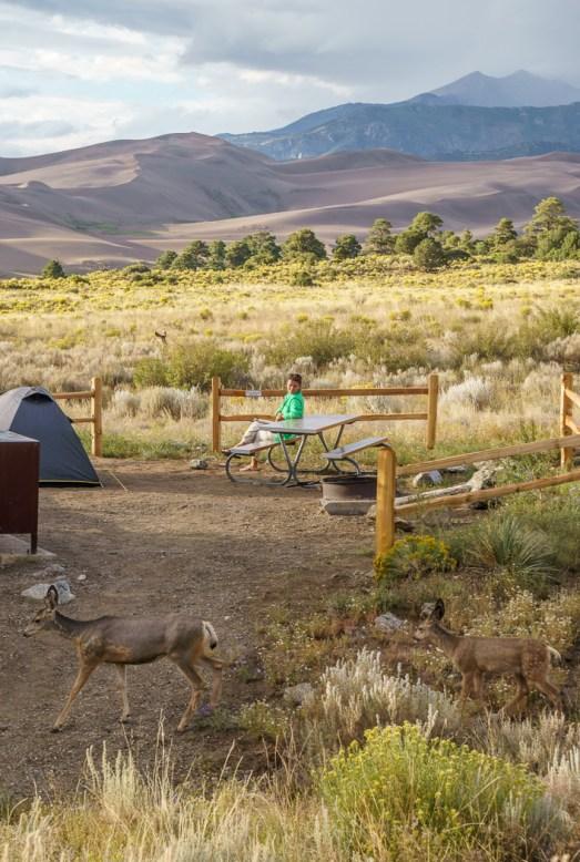 Great Sand Dunes et les biches au camping