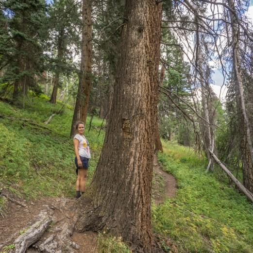 Colorado road trip - sur le chemin de randonnée