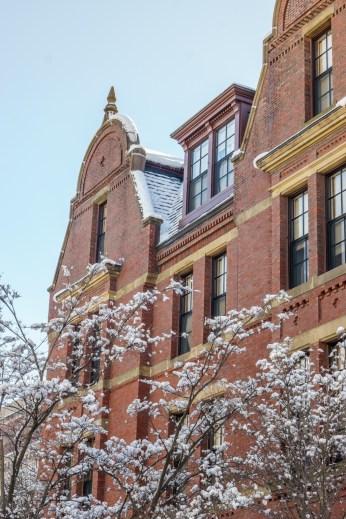 Harvard Art Museum - Harvard Yard sous la neige