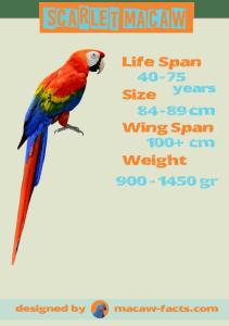 Scarlet Macaw Parrot Macaw Bird