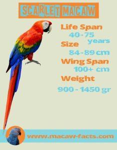 Scarlet Macaw - Ara macao - Red Macaw