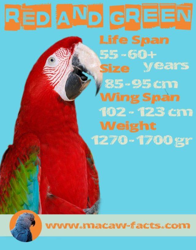 Ara chloropterus, green winged macaw