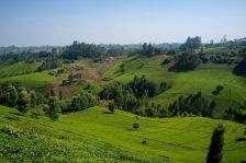 Tee Plantagen prägten das Landschaftsbild in und um das Dorf in dem ich die Woche verbracht habe