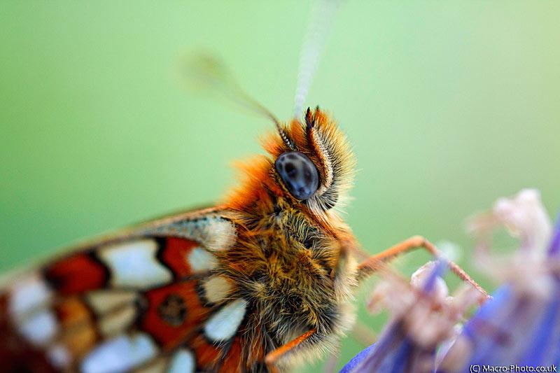 Butterflies & Bug at Bentley Wood.