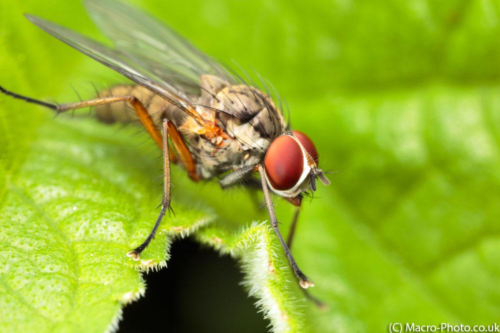 Flies, Bugs and Birds