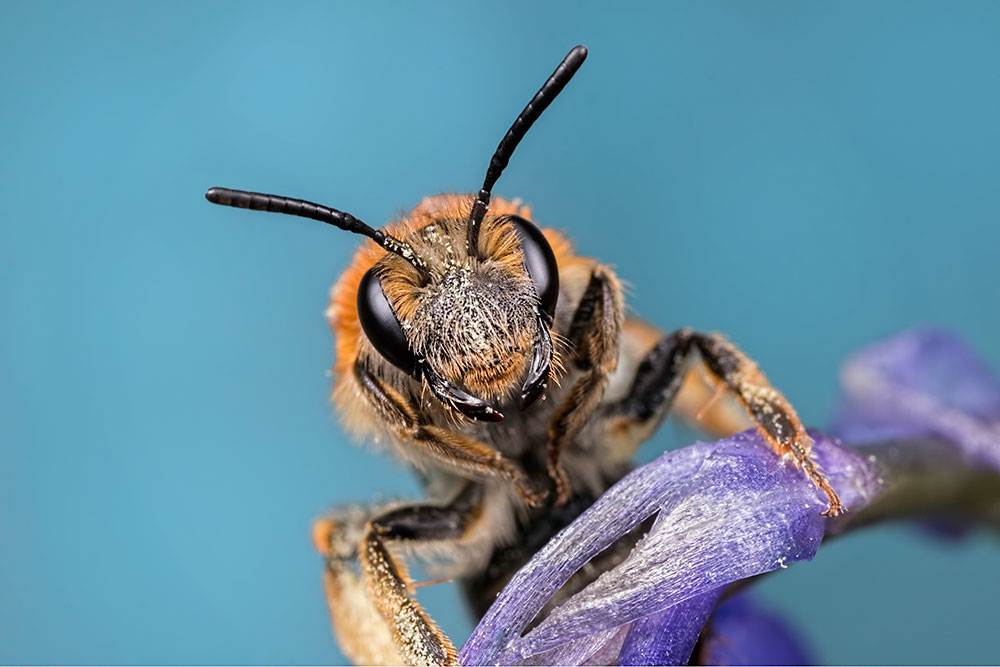 Banking on Bees
